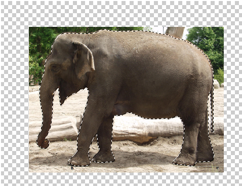 Surreal Fur Elephant in Photoshop - Step - 1