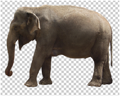 Surreal Fur Elephant in Photoshop Step - 2