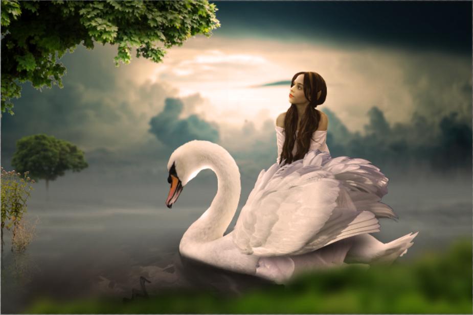 Swan photo manipulation_vfxmaximum.com